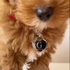 engraved large heart pet tag